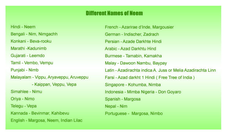 different-name-of-neem