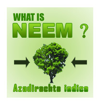 what-is-neem